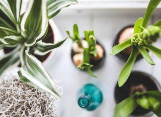 Zdjęcie kwiatów na parapecie, od góry, wraz z zieloną butelką, ilustruje tekst - jakie kwiaty do domu