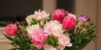 Bukiet frezji i tulipanów to idealna odpowiedź na pytanie jakie kwiaty wybrać na dzień matki.