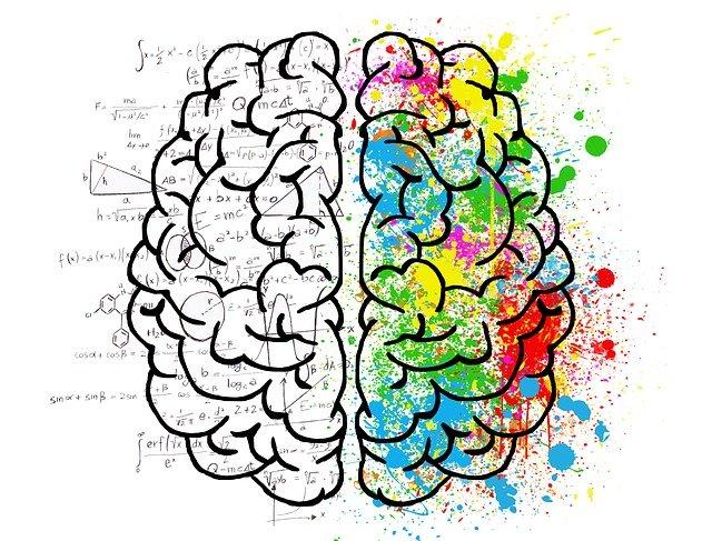 Kolorowy i analityczny mózg podzielony na połówki.