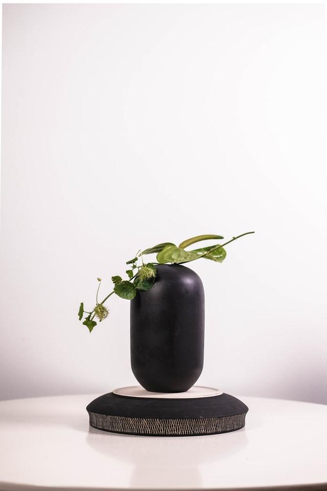 kwiaty w minimalistycznych doniczkach są idealnym elementem wystroju Japandi